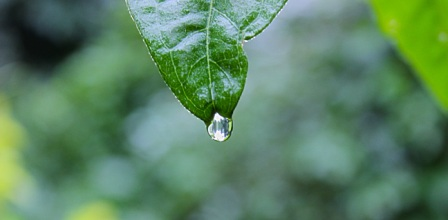 raindrop on leaf