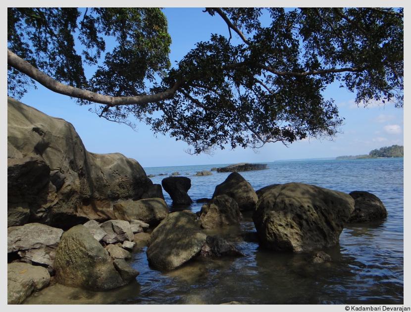 In the rocky inter-tide