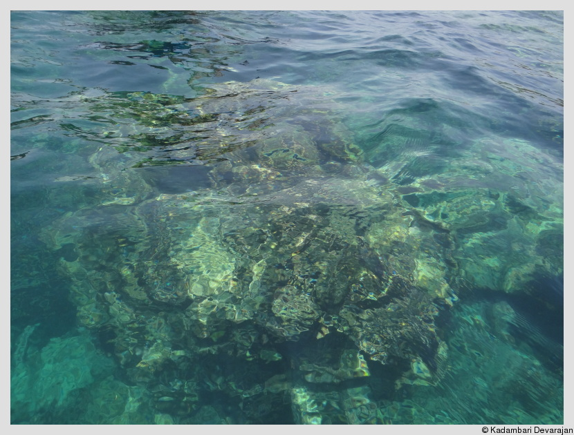 Fringe reefs