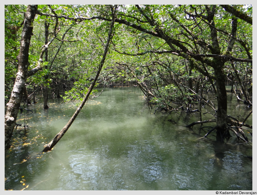 A mangrove at high tide