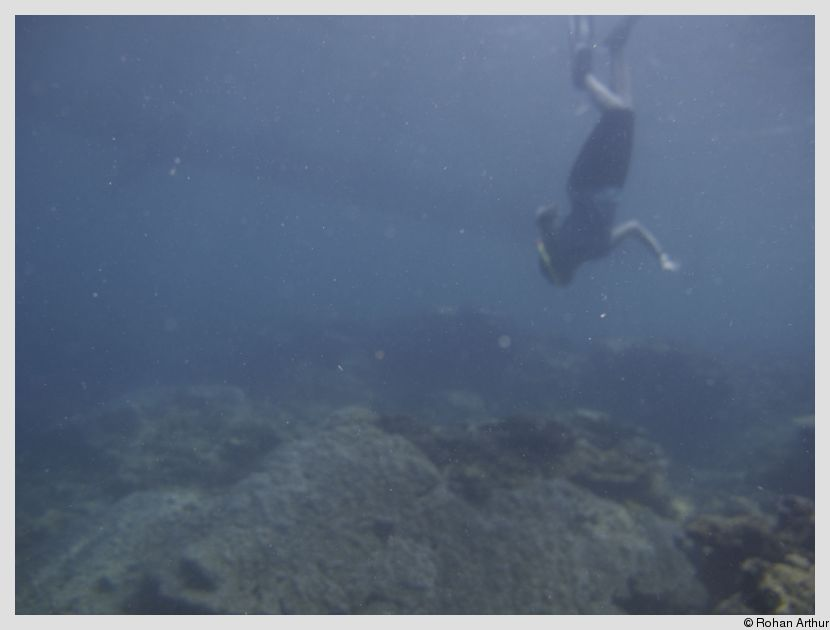 Yours truly, skin diving - trying to get a closer look at a stonefish